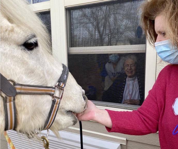 Horses Visit
